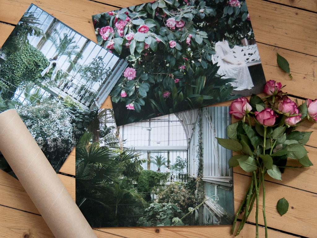 palmhuset secret garden projekt drömma