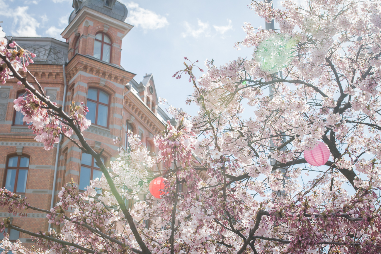 järntorget körsbärsblom Drömma Lotta Lundberg