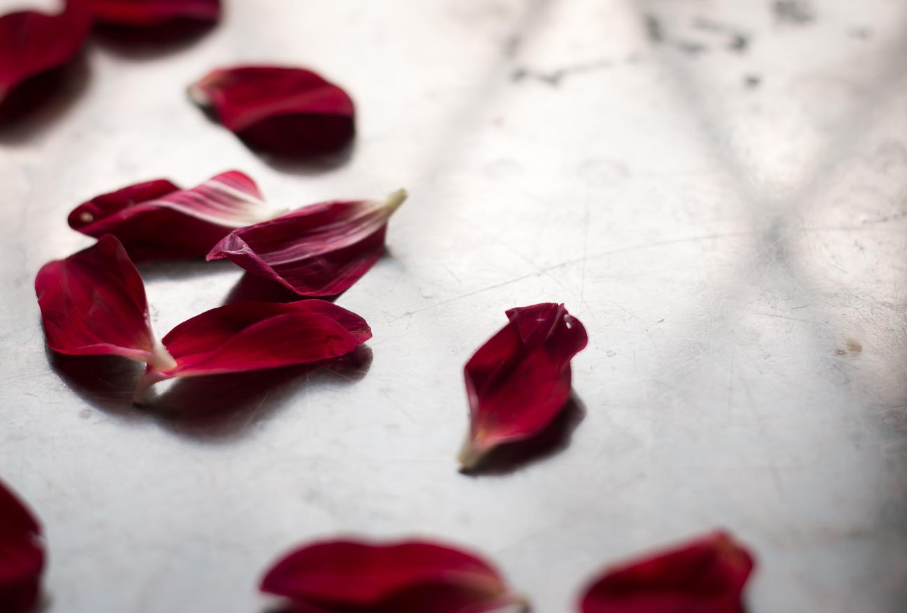 dahlia kronblad